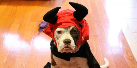 3 Halloween Safety Tips From Alabama's Leading Veterinarians, Foley, Alabama