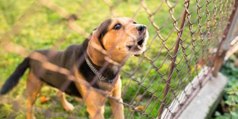 4 Benefits of Chain-Link Fences, Columbia, Missouri