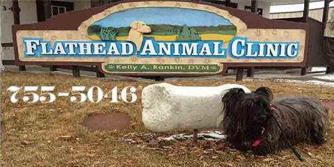 February is National Pet Dental Health Month, Kalispell, Montana