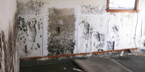 Symptoms of a Mold Contaminated House, Gulf Shores, Alabama