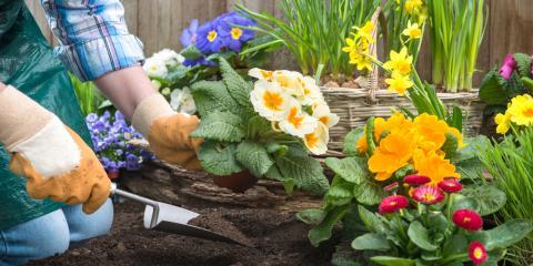 Seasonal Tips For Tree Care Flower Planting 4 Seasons