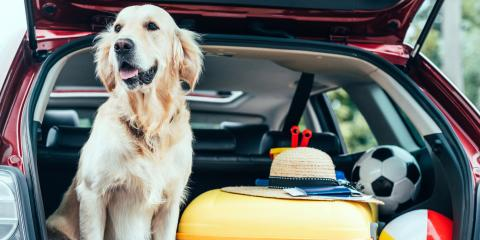 4 Tips for First-Time Pet Boarding , Newport-Fort Thomas, Kentucky