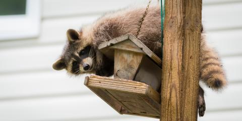 4 Tips for Keeping Raccoons Away From Bird Feeders, New Milford, Connecticut
