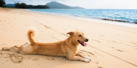 3 Summer Grooming Tips for Your Canine Companion, Churchville, New York