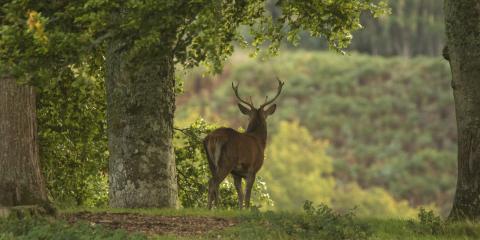 3 Deer Hunting Tips for Beginners, Bethel, Ohio