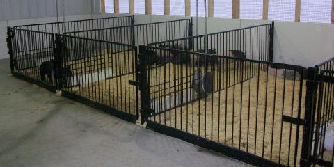 3 Benefits of a Show Barn Gate from Show Stopper Equipment by Vittetoe Inc. for Showing Livestock, Seventy-Six, Iowa