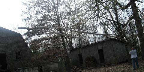 Lamb Tree Service Explains Why You Should Use an Arborist for Land Clearing, Dexter, Kentucky