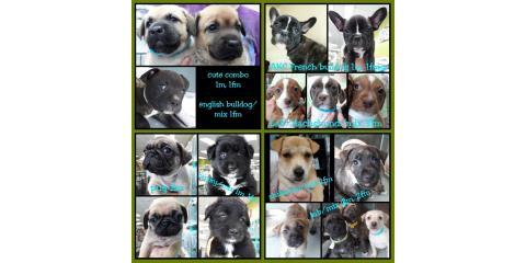 Current Puppies at The Pet Hale!, Ewa, Hawaii