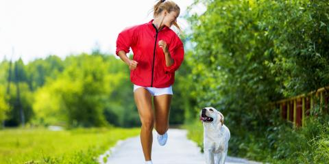 5 Simple Tips to Keep Your Dog Healthy: Advice From Churchville's Top Kennel , Churchville, New York