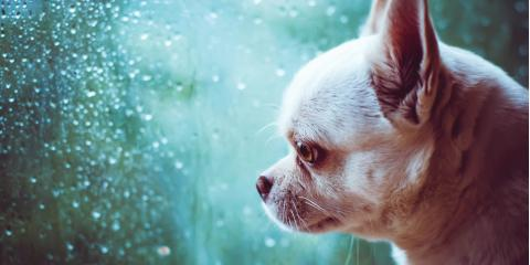 5 Tips to Help Ease Your Dog's Anxiety , Ewa, Hawaii
