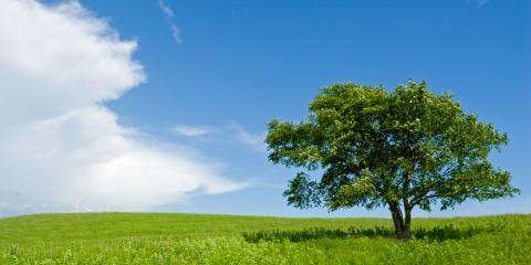Certified Arborist Explains Whether Trees Need to Be Fertilized, Ozark, Alabama
