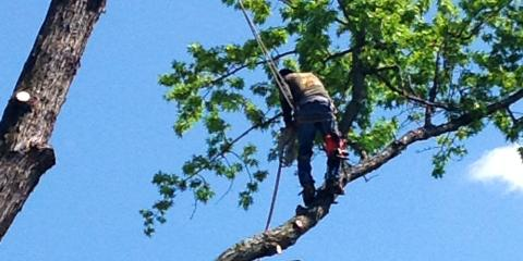 Preventive Tree Service at Affordable Rates, Bowie, Maryland
