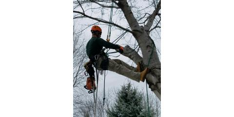 Understanding Winter Tree Care, Waverly, Nebraska