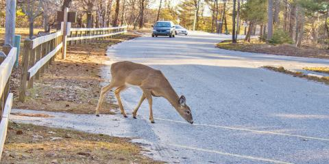 Top 3 Tips to Avoid Hitting a Deer With Your Car This Fall, San Marcos, Texas