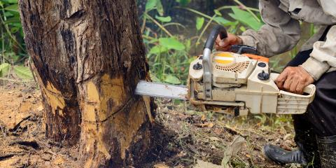 4 Reasons Homeowners Need Dead Tree Removal Services, Marshan, Minnesota