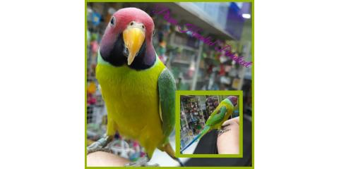Exotic Birds Currently Available at The pet Hale!, Ewa, Hawaii