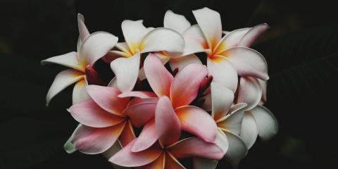 5 Reasons Why Birthday Flowers Make the Perfect Gift, Koolaupoko, Hawaii