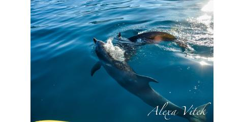 How Do Dolphins Communicate With People?, Waianae, Hawaii