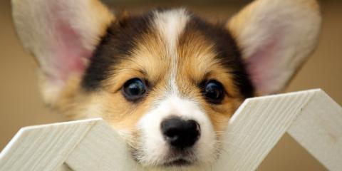 4 Tips From Twin Cities Veterinary Clinic Vets on Choosing a New Puppy, Kalifornsky, Alaska