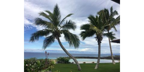 Tips for Planting a Mature Coconut Palm In Hawaii, Kailua, Hawaii