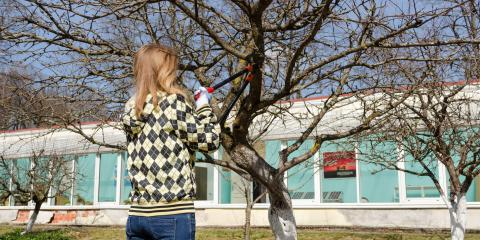 3 Reasons Why the Dormant Season Is the Best Time for Tree Trimming, Marshan, Minnesota