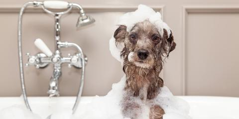 3 Must-Know Plumbing Tips for Pet Owners, Watertown, Connecticut