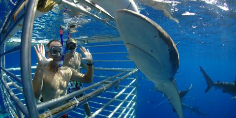 5 Random Facts About Sharks, ,