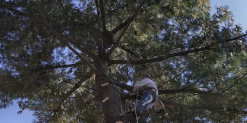 3 Essential Questions to Ask a Tree Company, Cincinnati, Ohio