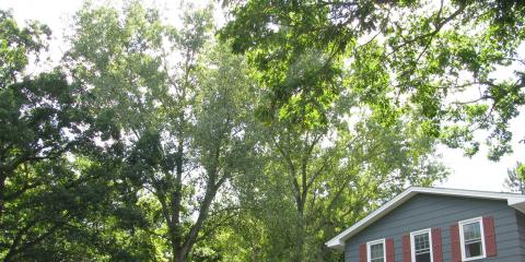 3 Signs It's Time to Hire a Tree Removal Company, Royalton, Minnesota