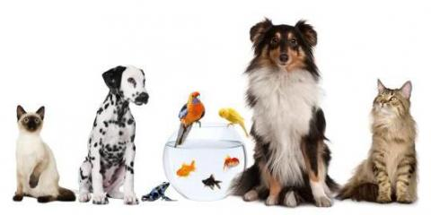 Honolulu's Best Pet Hospital Helps You Care for Your New Kitten or Puppy , Honolulu, Hawaii
