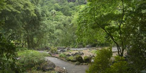 3 Reasons the Waimea Valley Botanical Garden Is One-Of-A-Kind, Koolauloa, Hawaii