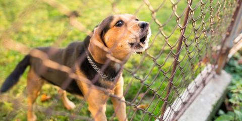 3 Types of Dog Fences to Consider, Newark, Ohio
