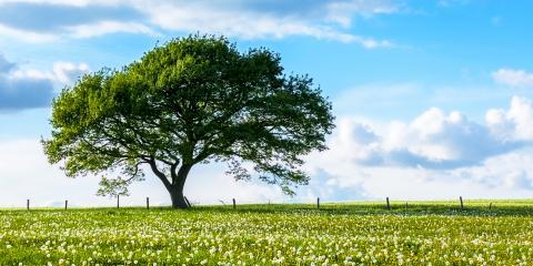 How to Take Care of Oak Trees, Commerce, Georgia