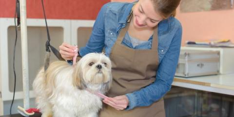 How Often Should You Take Your Pet to a Groomer?, Ogden, New York