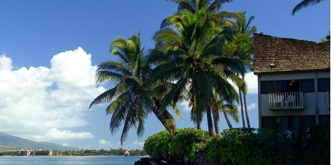 A Guide to Palm Tree Maintenance, Hilo, Hawaii