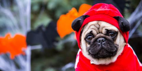 A Guide to Pet Safety on Halloween, Covington, Kentucky