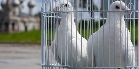 3 Reasons to Release White Doves at a Memorial Service, Covington, Kentucky