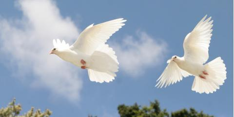 Common Questions About Releasing White Doves at Funerals, Covington, Kentucky