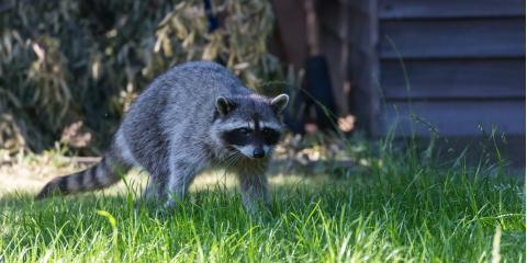 3 Benefits of Hiring a Humane Animal Removal Service, Miami, Ohio