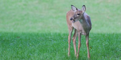 How Deer Repellent Will Protect Your Property, Brookfield, Connecticut