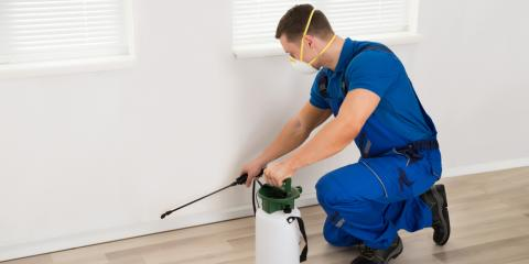 What Problems Can Pests Cause in Your Home?, Concord, Alabama