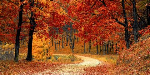 3 Places to See Fall Foliage From Your Branson Vacation Rental, Branson, Missouri