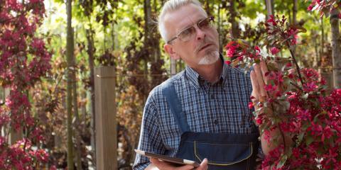 Professional Tree Care Experts Explain Common Tree Diseases, Center City, Minnesota