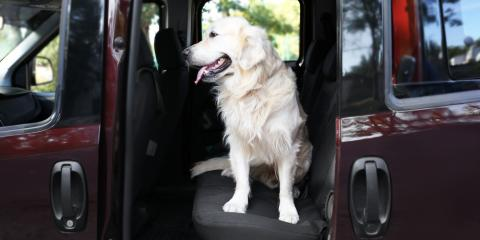 Driving With Dogs: ABRA Auto's Top Automotive Safety Tips, Peoria, Arizona