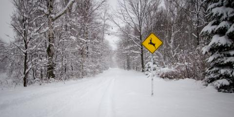ABRA Auto Repair's Tips for Avoiding Wildlife Collisions This Winter, Madison, Wisconsin