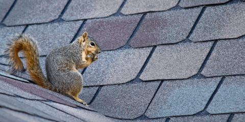 What You Need to Know About Squirrels in Your Home, Mooresville, North Carolina