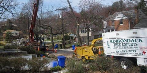 Adirondack Tree Experts Carry Out Preventative Tree Pruning For Hurricane Season, Beltsville, Maryland