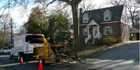 Adirondack Tree Experts Will Help Prepare Your Backyard This Hurricane Season, Beltsville, Maryland