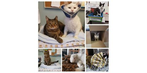 Sponsor-A-Cat, Foster, Adopt:  Donors can support our clinic in a truly unique way!  Click here for more info: , Stratford, Connecticut