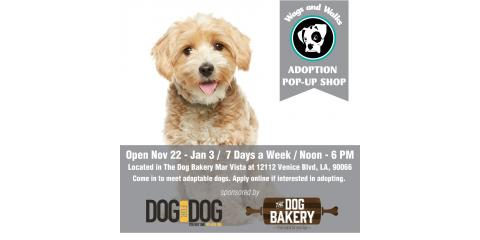 Adoption Pop Up Shop at Our Venice Location!, Los Angeles, California